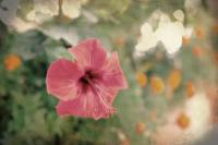 <h2>Vintage flower</h2><p></p>