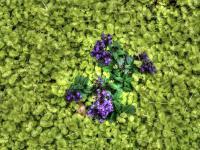 <h2>Purple & green</h2><p></p>