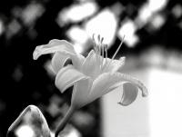 <h2>Black & white</h2><p></p>