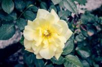 <h2>Yellow</h2><p></p>