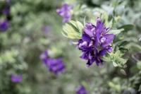 <h2>Purple</h2><p></p>