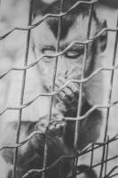 <h2>Life behind bars</h2><p></p>