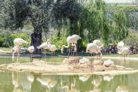 <h2>The flamingo's lake