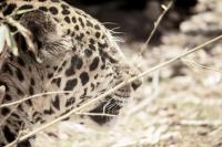 <h2>Jaguar</h2><p></p>