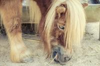 <h2>Pony</h2><p></p>